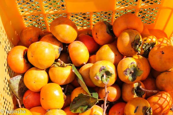 柿酢の仕込み、エゴマの収穫など