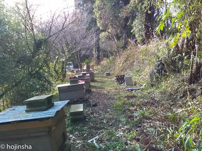 Audibleを聴きながら蜂場の整備、侵食してきた竹を切りました