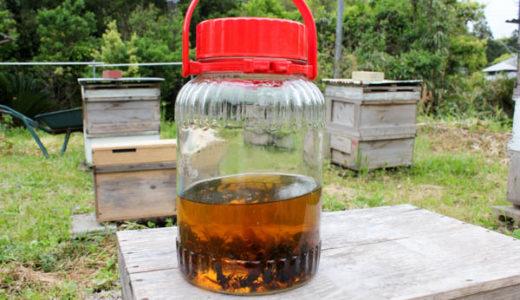 オオスズメバチの焼酎漬け 作りかたと効能