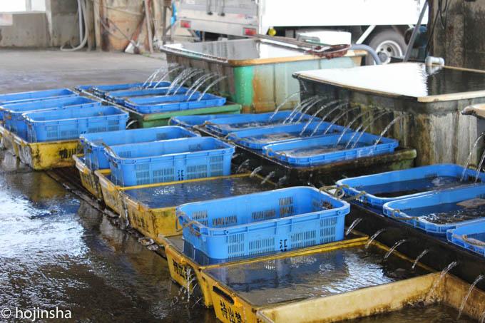 漁協の水揚げ