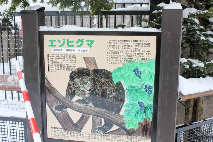 旭山動物園エゾヒグマ