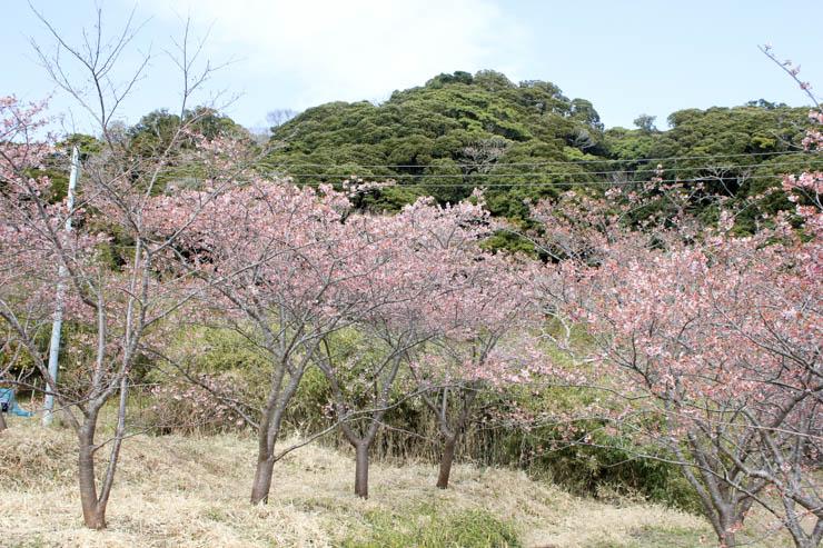 和田町抱湖園