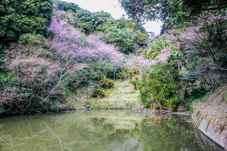 【南房総市和田町】抱湖園 おすすめの散策ルート