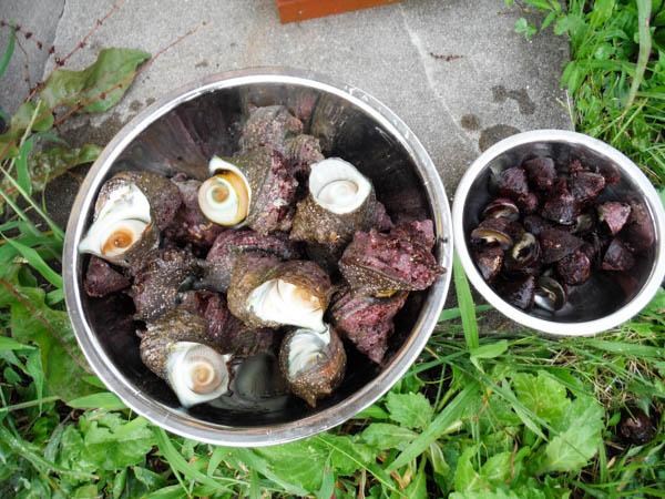 【2017年素潜り漁5回目】アワビはゼロ、サザエ、シッタカが獲れました