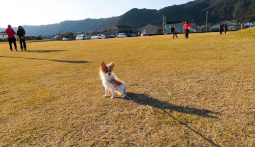 潮風王国(千倉)は犬の散歩に適している
