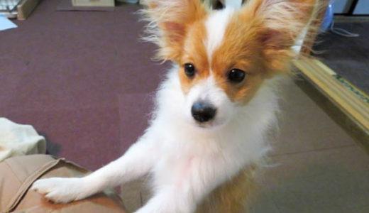犬の甘噛みの原因と対策