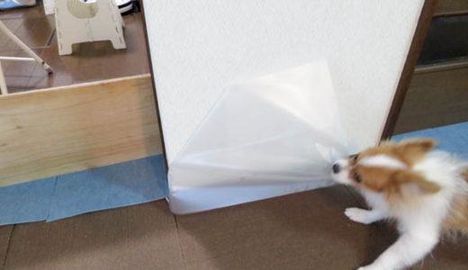 犬の壁のひっかき防止、対策