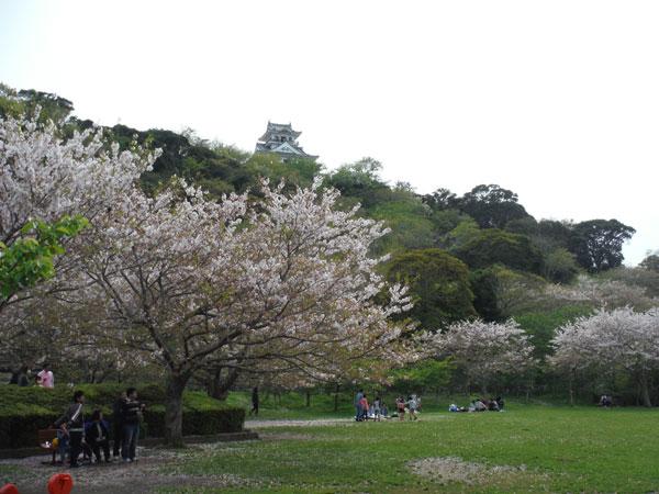 午前中は内検、午後は館山の城山公園へ花見、お昼はなかぱん