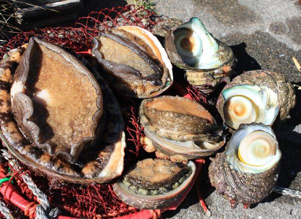 鴨川市で念願の漁業権を取得しました